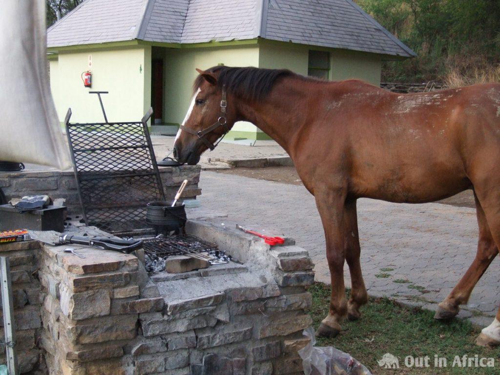 Ein Pferd kommt mal gucken