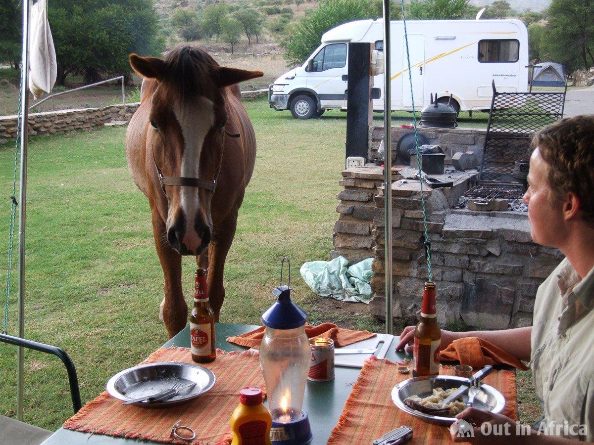 Die Pferde hatten keine Scheu