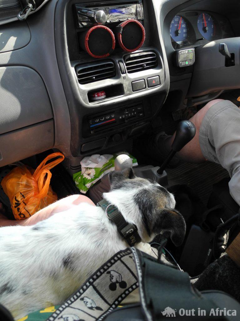 Penny während der Fahrt