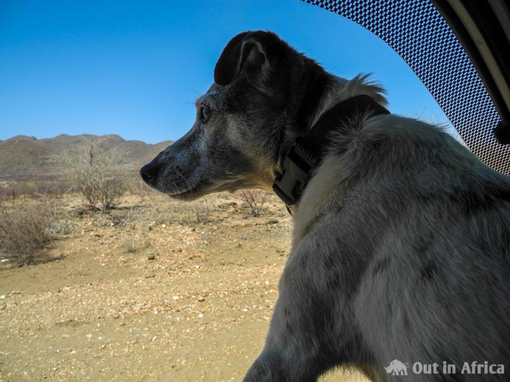 Penny guckt aus dem Autofenster
