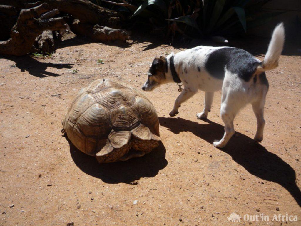Penny und Schildkröte