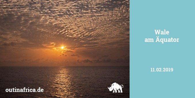 11.2.2019 – Wale am Äquator