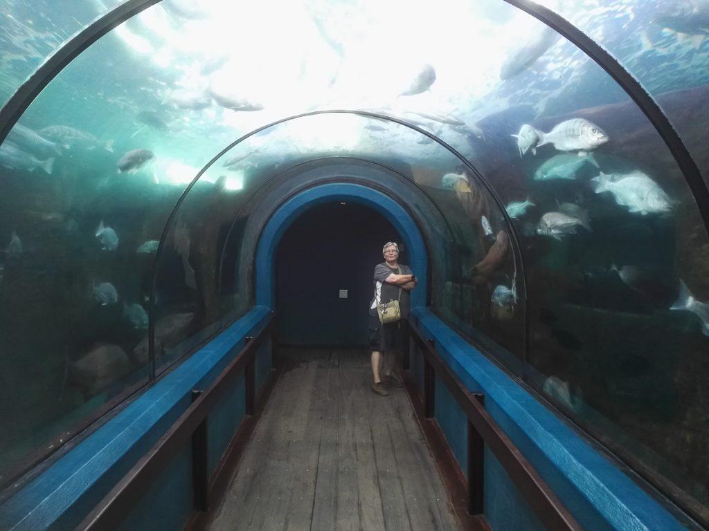 Wir staunen über die Fische im großen Becken