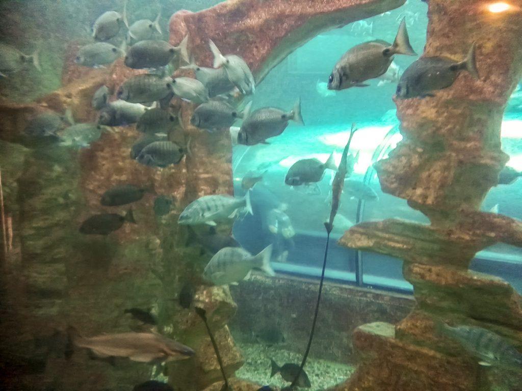 Ein Blick ins große Becken
