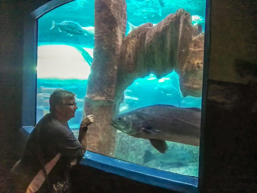 Am Fenster des großen Aquariumsbecken