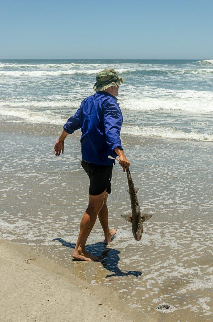 Der Hai darf weiterleben