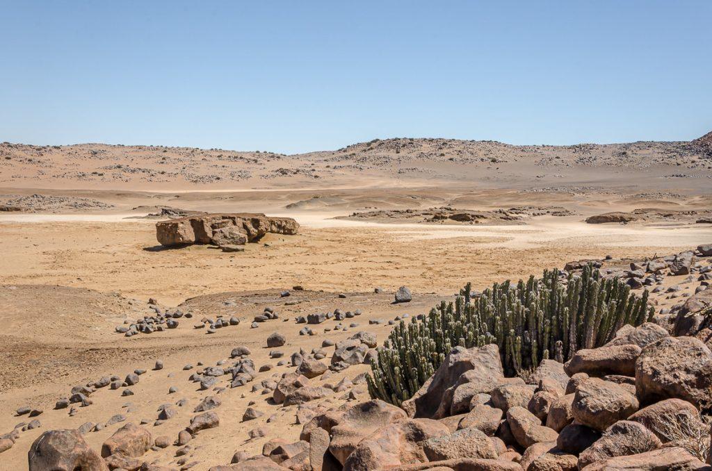 Euphorbia virosa vor Salzpfanne
